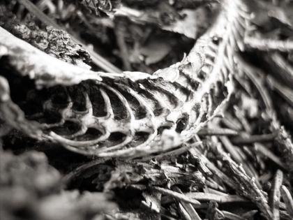 Torzo ubývajícího hada