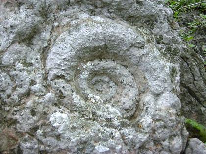 http://kotrla.com/pmpro/images/uploads/zkamenelina1.jpg